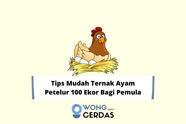 Ternak Ayam Petelur 100 Ekor