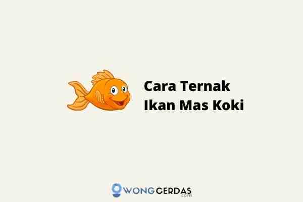 Cara Ternak Ikan Mas Koki