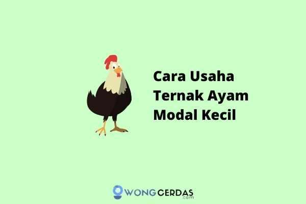 Usaha Ternak Ayam Modal Kecil